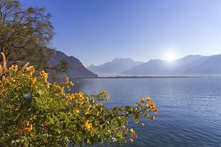 Blumen am Genfer See, Montreux, Schweiz Standard-Bild - 89053748