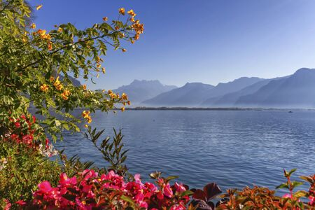 Plants and flowers next to Geneva Leman lake at Montreux by beautiful day, Switzerland