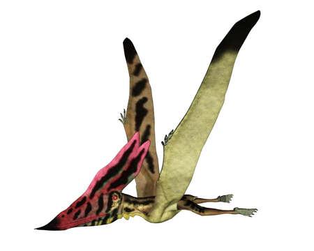 Thalassodromeus prehistoric bird flying - 3D render Banque d'images