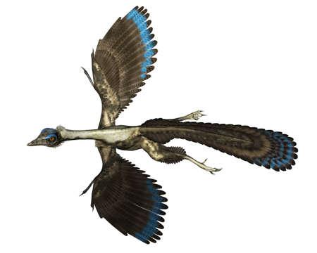 Archaeopteryx bird dinosaur flying - 3D render Banque d'images