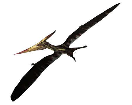 Pteranodon prehistoric bird flying - 3D render Banque d'images
