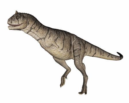 Carnotaurus dinosaur isolated on white