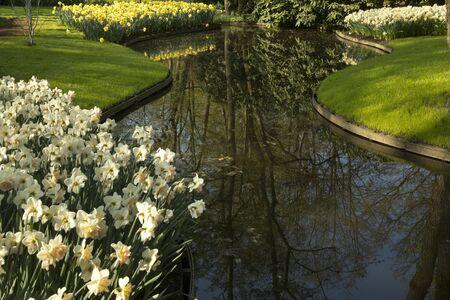 Flower in Keukenhof park, Netherlands.