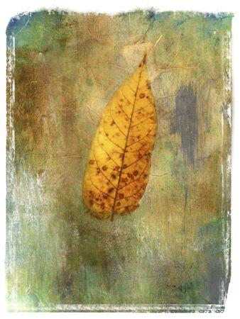 Photo based mix media image of leaf.