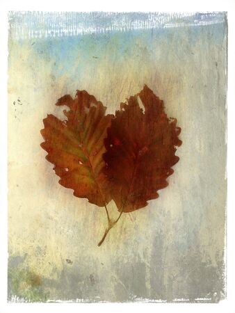 Mix media image of twin leaves.