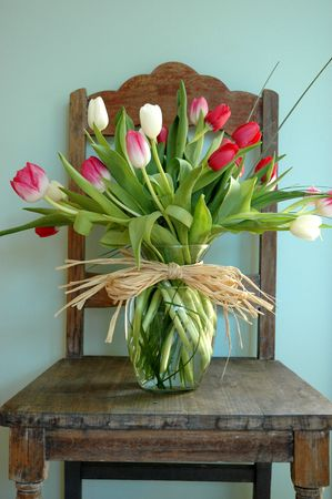 Tulips sitting in an eggshell blue interior on an old chair. Stock Photo