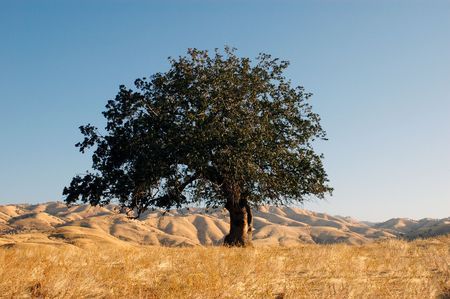 Oak tree on a mountaintop. Stock Photo