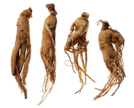 Ginseng, the energy root. Four whole ginseng roots, isolated on a white background. Stock Photo - 290494