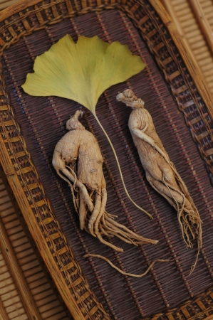 asian produce: Ginseng, the energy root with Ginkgo leaf. Shallow depth of focus-focus on the left root.