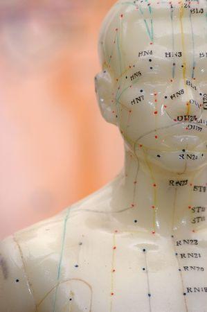 acupuntura china: Recortar� cerca de un modelo de acupuntura cabeza.