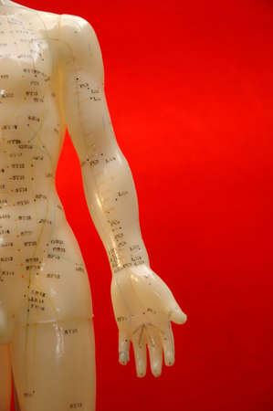 Cropped close up of an acupuncture torso on a red background. photo