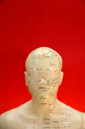 Acupuncture model head with red background.
