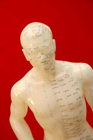 Acupunture model on a red background. photo