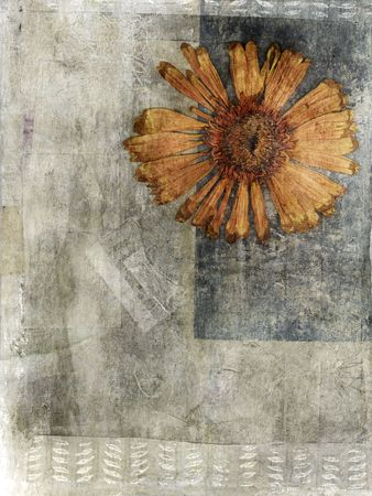 pressed: Pressed Flower in a Mixed Medium art background. Stock Photo