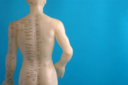 Cropped close up of an acupuncture model back, photographed on blue. Stock Photo