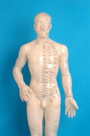Acupunctuur model gefotografeerd op blauw.