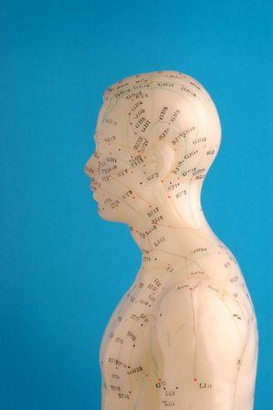 Acupunctuur model hoofd in profiel.