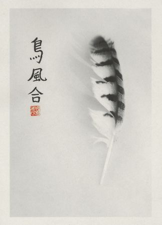 Still life photograph of owl feather printed on Kozo paper with hand applied Chinese calligraphy. The characters are Bird, Feather and Harmony. Stock fotó