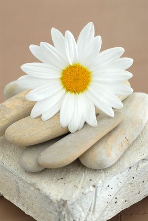 A single Daisy resting on stones and a small pedestal.
