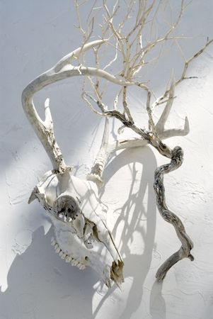 Deer skull and plant bone. Deer have significant roles in mythology from around the world. Stock Photo - 2095299