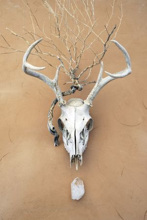 the shaman: Animal, vegetable, and mineral. Deer skull, plant skeleton, and crystal on adobe surface.