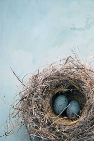 Blue eggs In a natural birds nest.