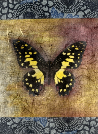textural: Mixed medium illustration of a butterfly.