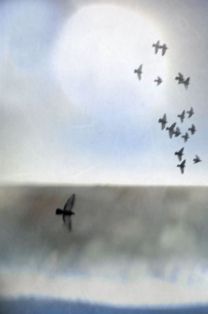 Illustration of birds in flight over an abstract landscape of sea, shore, and light.
