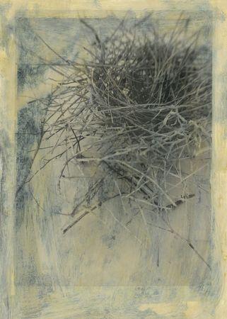 A doves nest. Scan of an alternative fine art photograph.