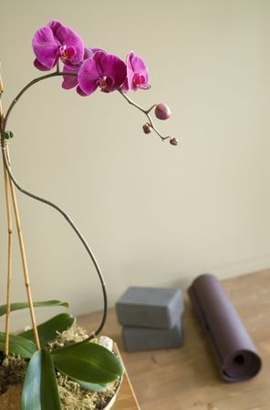 Calming interior with orchids and yoga props.