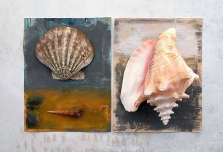 scallops: Natural still life with painted surfaces. Seashells.  Stock Photo