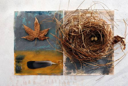 Natural still life with painted surfaces. Nest with eggs, feather, and Sycamore leaf.