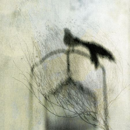 artistry: Bird out of cage. Photo based illustration with textures and patterns.