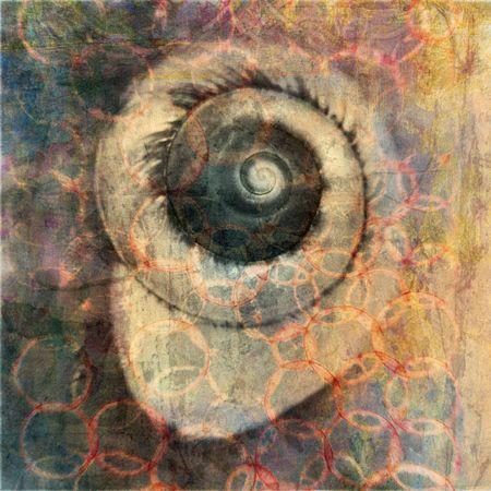 Sea snail photo based illustration.