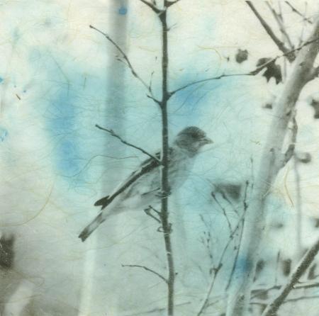 Photograph printed on blue staned Japanese Kinwashi manila hemp paper.  Stock Photo