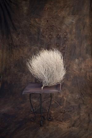 shamanic: Desert bush photographed in a rustic studio setting.  Stock Photo