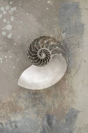 Black and White photograph with textures of a Nautilus Seashell  photo