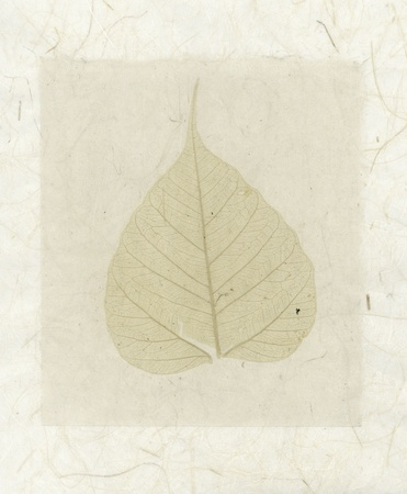 Bodhi Leaf collage with natural organic papers   Stock Photo