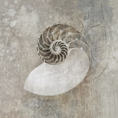 Black and White photograph with textures of a Nautilus Seashell
