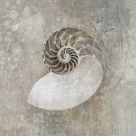 Zwart-wit foto met texturen van een Nautilus Seashell Stockfoto