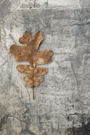 Natural Object Still Life Series