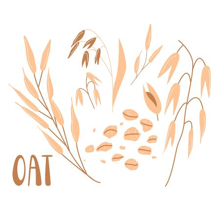 Cereal plants, Oat groats flakes isolated on white background. Flat illustration of grains. Healthy nutrition logo, packaging concept design. Logo
