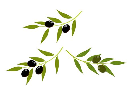 Green and black olives with sprigs on a white background. Illustration 向量圖像