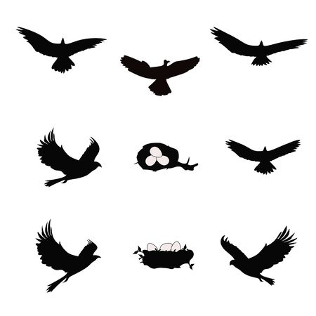 Black silhouettes of an eagle, falcon, hawk and nest with eggs on a white background. Illustration. vector