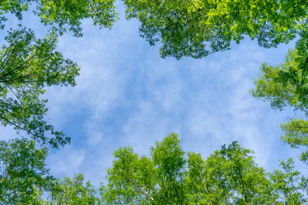 Beautiful natural frame from trees. Blue sky through the foliage. Look up, copy space.