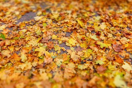 Defocused autumn nostalgic background. Authoring, soft focus. Stock fotó