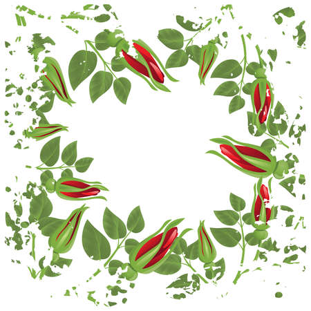 Grunge white background with red roses and green leaves Vector