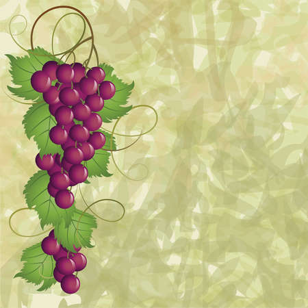 grapevine: Grapevine on a green background Illustration