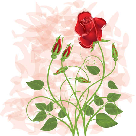 a bud: Background with   bouquet from red rose Illustration