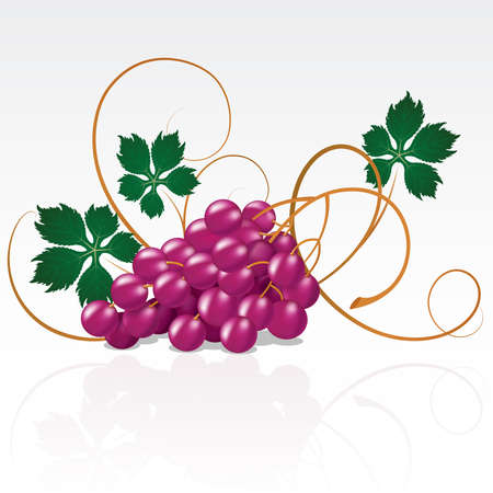 detail of bunch:  Grapes with green leaves on a white background